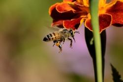 Hoe behandel je een bijensteek